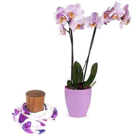 Ternura: orquídea y fular